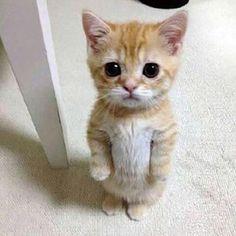 「お願い猫ちゃん」の画像検索結果