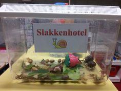 Ontdekken: Slakkenhotel Infant Activities, Summer Activities, Bugs, Outdoor Education, Nature Study, Teacher Tools, Toddler Fun, Learning Through Play, Working With Children