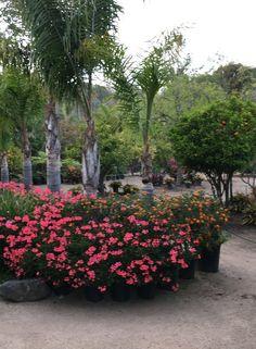 Up this week in Zippertravel's PlaceMaker Series: Painter Eamon Harrington in Malibu California Malibu Beaches, Malibu California, Places To See, Orchids, Digital, World, Plants, Travel, Viajes