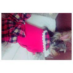 . 韓国行ってきました(๑˃̵ᴗ˂̵) ホンデ行った時にかわいい服見つけて即買い😘 AKBみたいなフリフリ💯💯 自分はフリフリ系の服は着ないから Haruの服を選ぶのは楽しい♩*. . #ヨークシャテリア #ヨークシャーテリア #ヨーキー #よーくしゃてりあ  #犬 #dog #愛犬  #yorkshireterrier #yorkshire #子犬