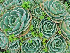 Love these, easy to grow and propagate. They are called Hens & Chicks.