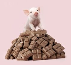 Pink Pig and Chocolate - Diamond Painting Kit Pet Pigs, Baby Pigs, This Little Piggy, Little Pigs, Cute Funny Animals, Funny Cute, Animals And Pets, Baby Animals, Teacup Animals