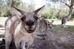 Image from http://images.3aw.com.au/2014/03/19/5273850/kangaroos.jpg.