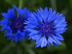 One of Aunt Deb's favorite flowers, and maybe my next tattoo. She'd kill me. Haha. <3