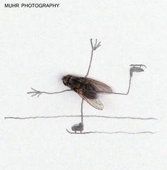 VLIEGENHUMOR    by  Magnus Muhr    Je kunt een dode vlieg uit het raam gooien, maar je kunt er ook iets leuks mee doen. Dit was precies de reden van Magnus Muhr om met gevonden dode vliegen deze serie te maken.   http://www.froot.nl/posttype/froot/vliegenhumor/#