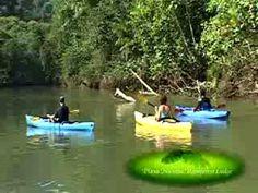 Playa Nicuesa River Tour #travel #kayaking