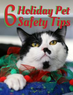 6 Holiday Pet Safety Tips |Calgary Humane