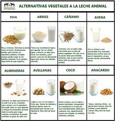 Nutrición - Alternativas naturales a la leche animal