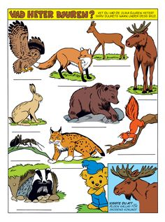 Djur i skogen – Bamse.se Croatian Language, Teaching Tips, Science And Nature, Kids Education, Biology, Scooby Doo, Reggio Emilia, Homeschool, Teacher