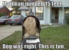 Cat vs Mailman