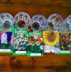 Soak your seeds in warm water 24 hours before sowing. Soak your seeds in warm water 24 hours before sowing. Backyard Farming, Backyard Landscaping, Easy Garden, Lawn And Garden, Organic Gardening, Gardening Tips, Urban Gardening, Garden Seeds, Herbs Garden