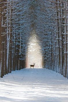 Winter nature wonderland