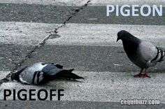 Pigeon. Pigeoff. I don't know why, but I just find this funny.
