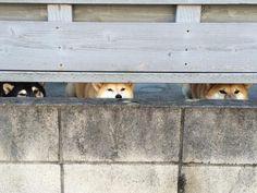 Eyes on the neighborhood!  : )