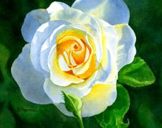 Roses Fine Art Print Watercolor Painting of White Roses