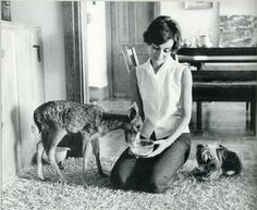 Audrey Hepburn with fawn & her dog, Mr. Famous