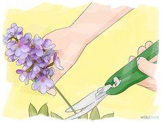 Prune Lilacs Step 1.jpg