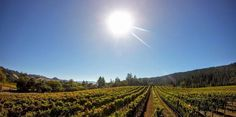 We're having a beautiful and warm October – there's no better time to visit Anderson Valley than right now!