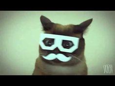 Al fin, una hora ininterrumpida con el gatico de Internet más importante en lo que llevamos de año.