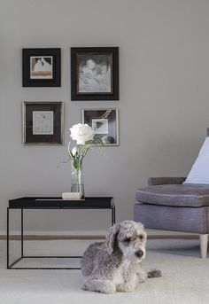 Modern classic living room. Hay Tray table, gallery wall, Adea Hudson chair, Linie Design Asko-carpet. Wall paint Skimming Stone by Farrow & Ball. via Coffee Table Diary blog