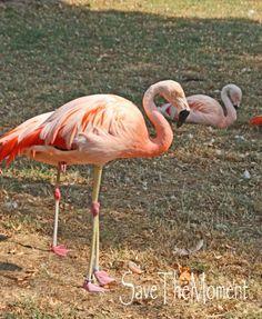 Jolinas Welt: Der Tiergarten Worms    Ein rosa Flamingo im Tiergarten Worms