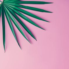 tropical leaves on pastel pink background minimal concept flat lay