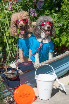summertime dogs