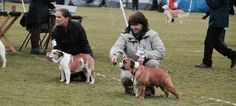 that's my boy chumlee New Puppy, My Boys, Labrador Retriever, Puppies, Dogs, Animals, Labrador Retrievers, Cubs, Animales