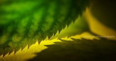 green and yellow and green by ani darbinyan