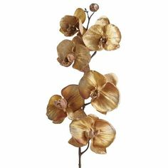 Bedroom: Phalaenopsis Orchid Gold, in aqua vase
