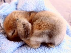 Cutest little bunny ever!