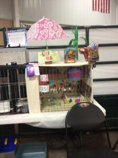10 Best 4 H Cat Project Images Cat Cages Cats 4 H