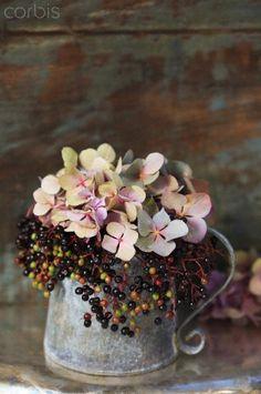 Hydrangea and elder berries