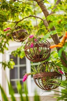 Metal orbs give air plants a lift. More creative container gardens: http://www.midwestliving.com/garden/featured-gardens/container-gardens-with-pizzazz/?page=4 #containergardeningideashangingbaskets