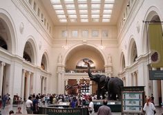 Museum of Natural History - NYC