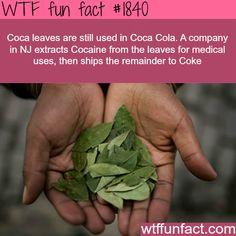 Coca leaves are still used by Coca Cola - WTF fun facts