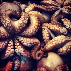 Octopus...so cool