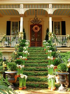 Amaryllis Lily and green stairs