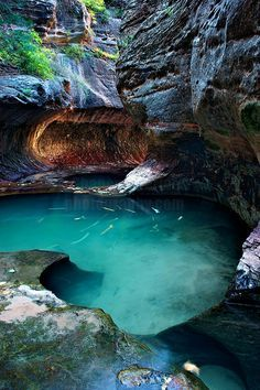 Well of Secrets, Zion National Park, UT by Shane McDermott