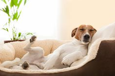 After your dog has used its dog bed for awhile, it will need to be cleaned. Dogs may get their dirty paws on the bed or they may drool on it. They are also likely to shed their hair on the bed. Cleaning the bed will get rid of the dirt and freshen
