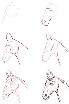 how to draw a horse's head - I have had this book since I was a kid. :)