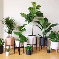 Large Mid Century Modern Planter with Plant Stand, Modern Plant Pot, Wood Planter Stand - Ceramic Pot - Bring nature inside your home with home plants. There are home plants in all sorts, sizes and s - Modern Planters, Wood Planters, Succulent Planters, Succulents Garden, Hanging Plants, Potted Plants, Diy Hanging, Pots For Plants, Silk Plants