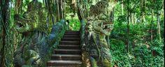 bali-tour-monkey-bridge
