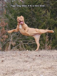 33 Funny Animals Guaranteed to Raise You Smile ~ Happy Dog Yoga Cute Puppies, Cute Dogs, Dogs And Puppies, Doggies, Animals And Pets, Funny Animals, Cute Animals, Crazy Animals, Happy Animals