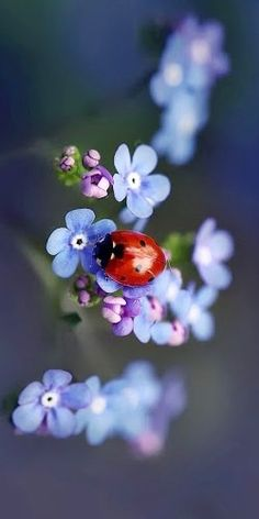 Ladybug and flower, two beautiful things become one~