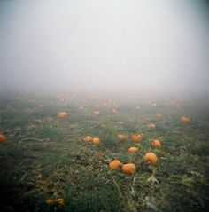 Pumpkin patch fog, by tomusan.