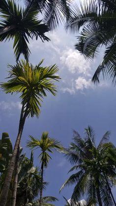 Island 🏝