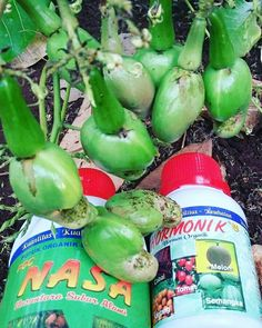 Siap memperoleh hasil panen yang memuaskan.... #distributornasa #nasa #nasajogja #pocnasa #hormonik #supernasa #supernasagranule #powernutrition #pupuk #pupukorganik #pestona #pentana #metilat #viterna #ton #aero810 #glio #bvr #pupuknasa #agenpupuknasa #carajadiagennasa #caradaftardistributornasa
