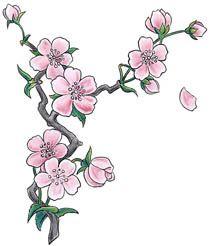 flores-de-cerejeira.jpg (210×246)