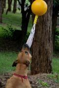Aussie Dog - Home Alone Toy  : )  Fun!